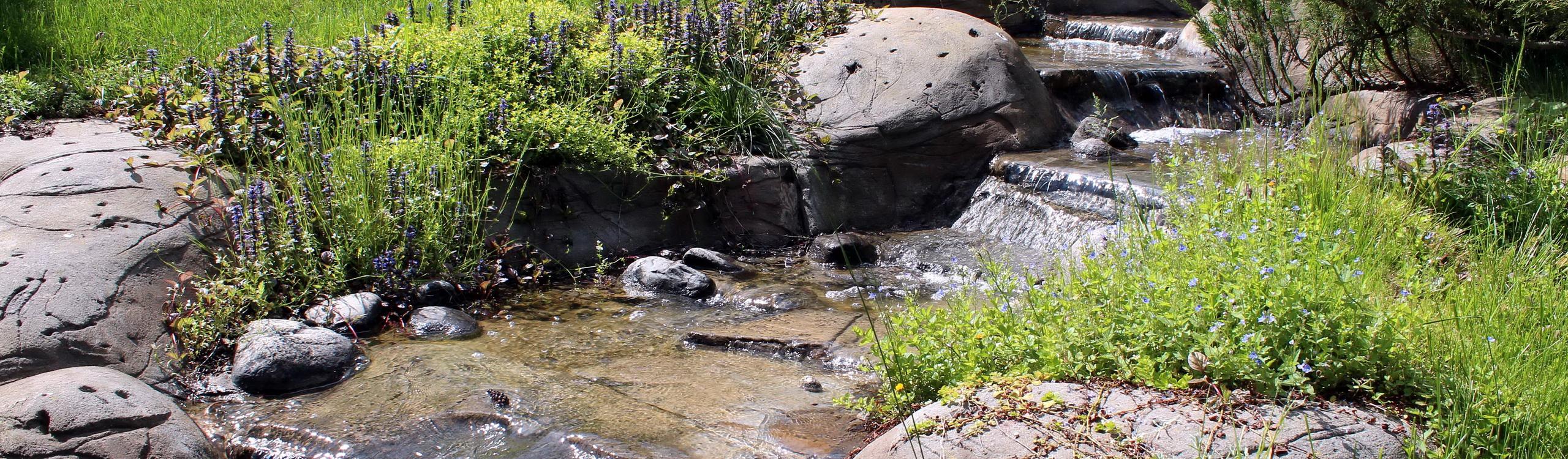 На склоне у ручья